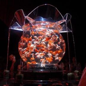 One Dreams of Goldfish,Japan