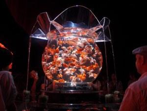 Hidetomo-Kimura-goldfish