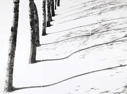 Trees in Snow series, Kiarostami, Courtesy of Candlestar